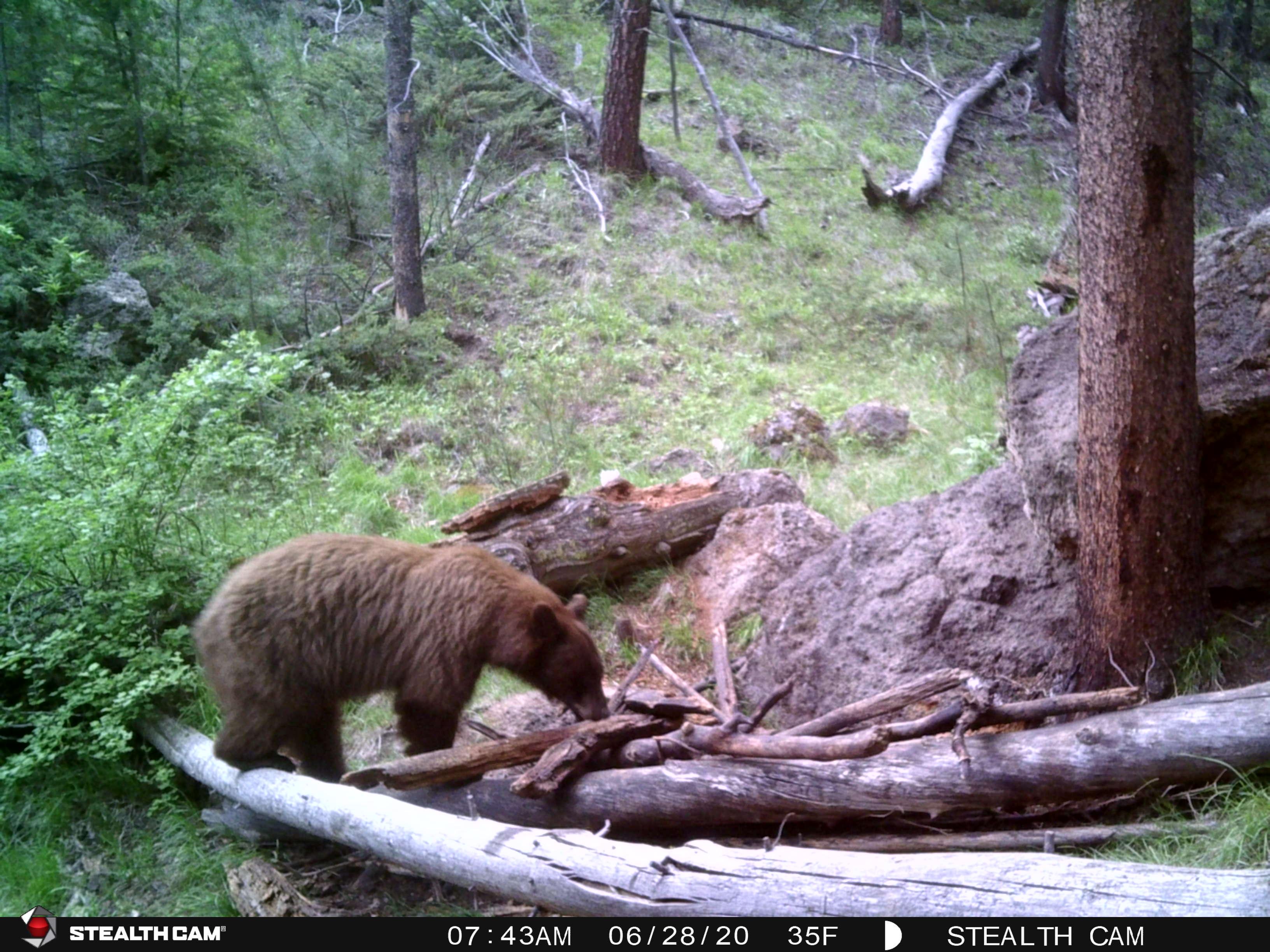 2020 Trail Cam image 2