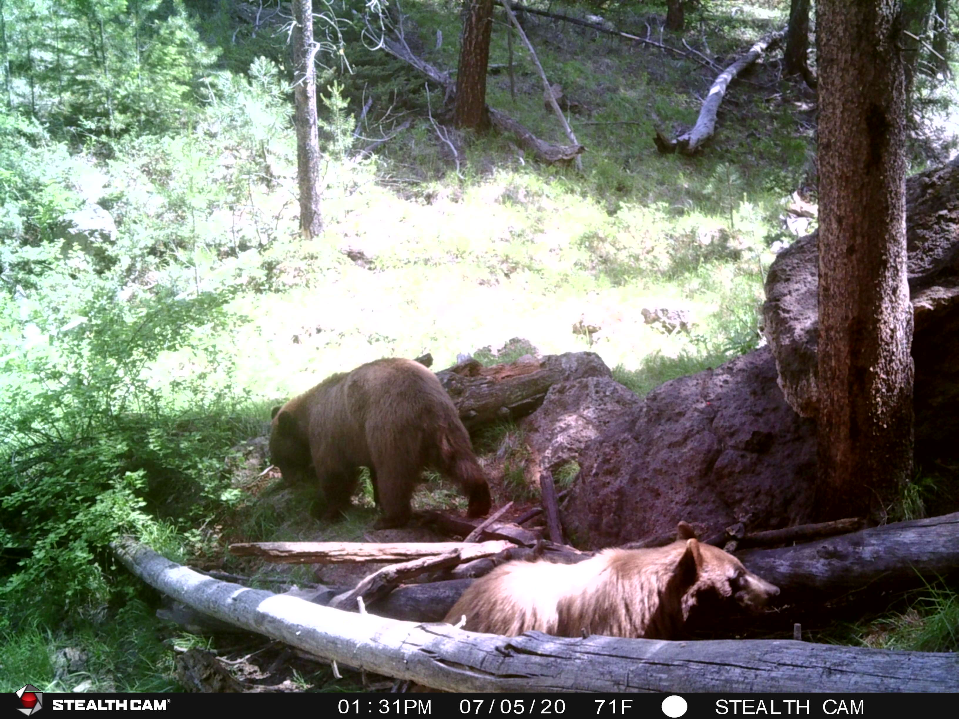 2020 Trail Cam image 3